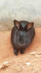 Doa-se um coelho