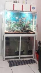 Vendo aquário completo de água doce,  e com fauna.