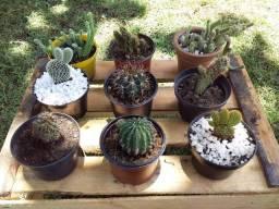 Floricultura Sol Plantas Nanuque