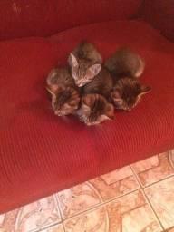 Lindos gatinhos filhotes