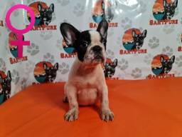 Bulldog Francês Filhote Fêmea