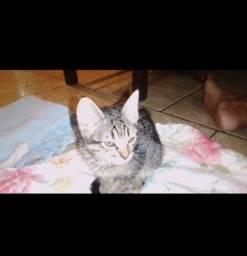 Doação filhote de gato.
