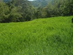 Procuro pasto para arrendar na região de Santa Luzia. (Fecho, Pinhões, Angu Duro)