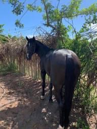 Cavalo de Esteira