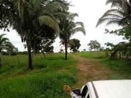 Fazenda com 333 hectares terra boa há 30 km de Livramento