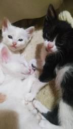 Doação de gatinhos!!