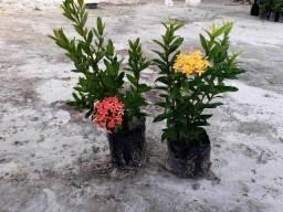 Plantas para seu jardim