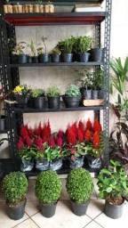 Plantas, Flores e paisagismo em geral