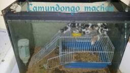 Vendo mecol e camundongos interessado chamar no zap. *.