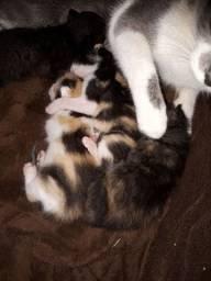 Doação responsável Lindos Gatinhos