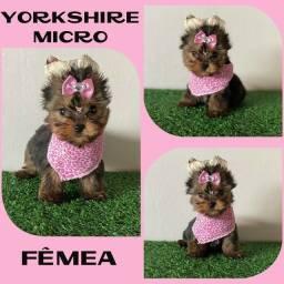 Yorkshire Micro Fêmea c/ Microchipe / Garantia / Parcelado 12x