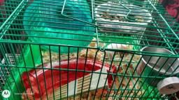 Hamster com gaiola