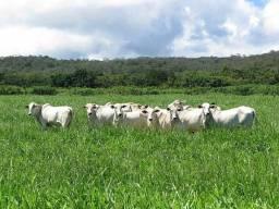 Arrendo pasto 5 alqueires desengado (Guarana)7km