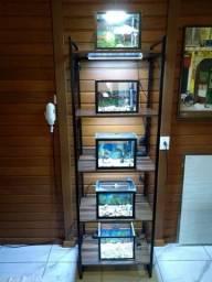 Mostruário de aquários
