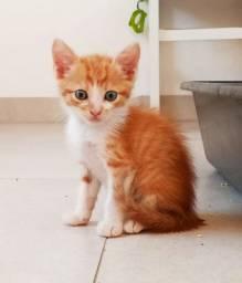 Doação de gatos machos SRD