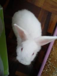Mini coelho fofo