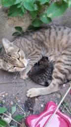 Gata com 1 filhote precisam de um lar