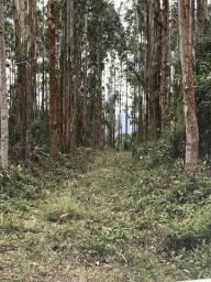 Área São Luiz do Purunã