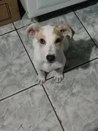 Um cachorro