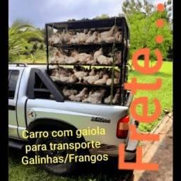 Gaiola para transporte de galinhas