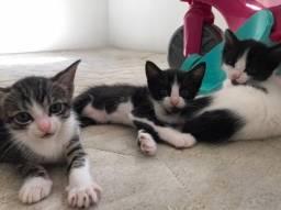 Gatinhos para adoção consciente