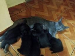 Doa-se lindos gatinhos