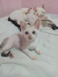 Gatinhas filhotes para adoção responsável!!