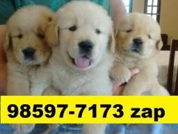 Canil Filhotes Cães Premium BH Golden Rottweiler Labrador Boxer Labrador Dálmatas