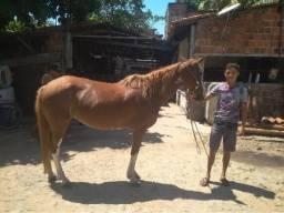 Égua phent horse