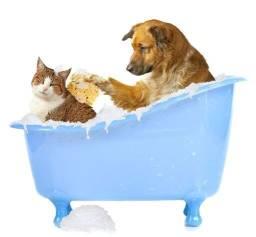 Vaga Tosador Pet - Banho e Tosa