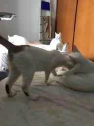 Gato para doação urgente