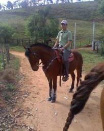 Cavalo Crioulo Castrado
