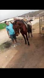 Troco por egua