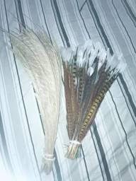 Penas de pavão e faisão