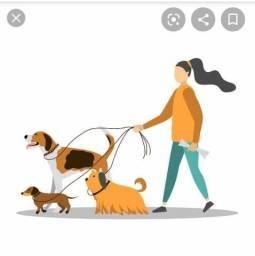 Passeadora de cães