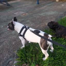 Bulldog francês pra reserva?