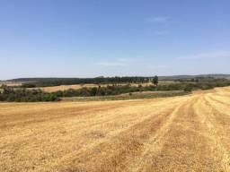 Fazenda 128 Alqueires, Oportunidade