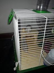 Hamster Gerbil