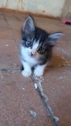 Doação urgente de gatinhos!