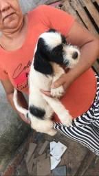 Doação  de cachorro urgente