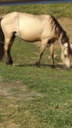 Vende-se Égua enxertada