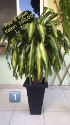 Plantas adultas