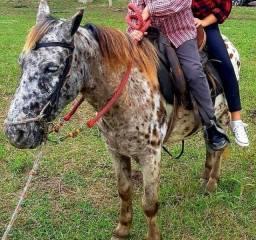 Peça cavalo