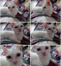 Gatinha branca