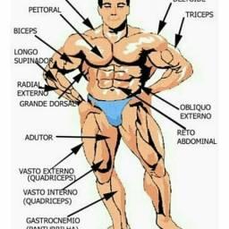 Curso de Sistema Muscular