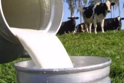 Vendo leite