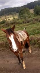 Cavalo para cavalgada