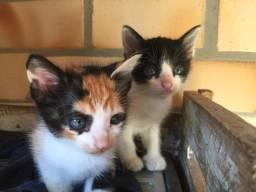 Doando Gatos filhotes