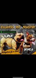 Filhotes Pit Monster