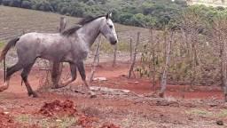 Cavalo manga larga 4.000 avista leva